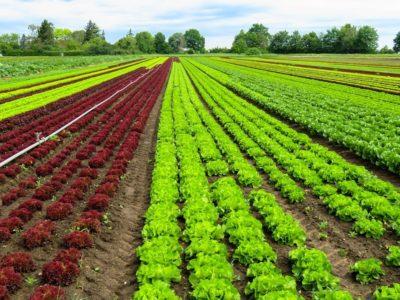Artigo – Agricultura, defesa do consumidor e do emprego