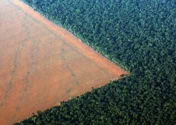 Em live, economistas discutirão Economia, Meio Ambiente e Amazônia